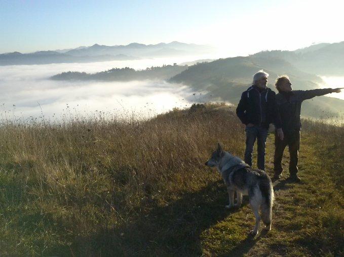 fog (1)